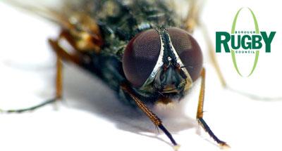 Fly Management – Brinklow Parish Council